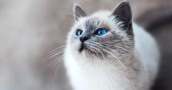 Best Cat Scarers