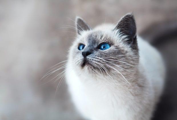 Best Cat Scarer